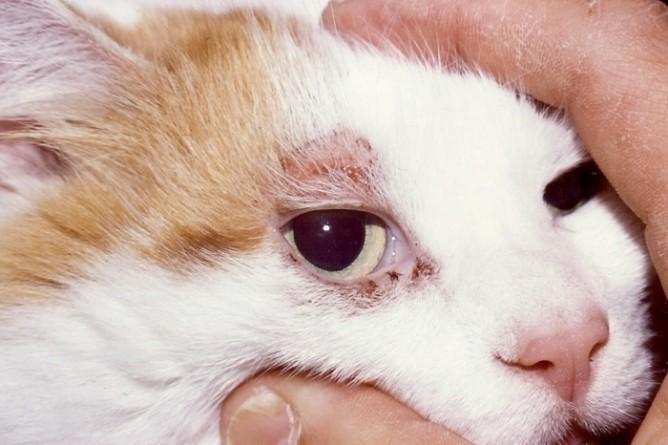Как сделать лесенку для кошки 150