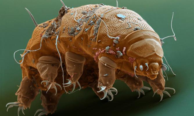 как можно избавиться от паразитов народными средствами