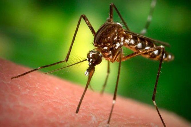 Кусающий комар