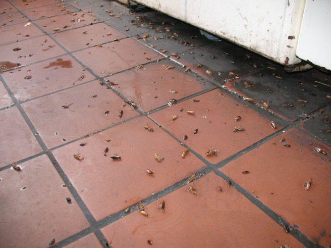 Тараканы в общежитии