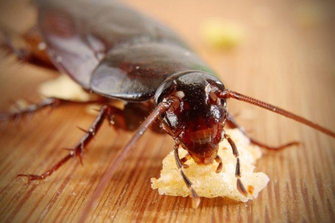 Чем вывести тараканов в домашних условиях быстро 134