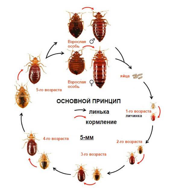 Чем вывести тараканов в домашних условиях быстро 544