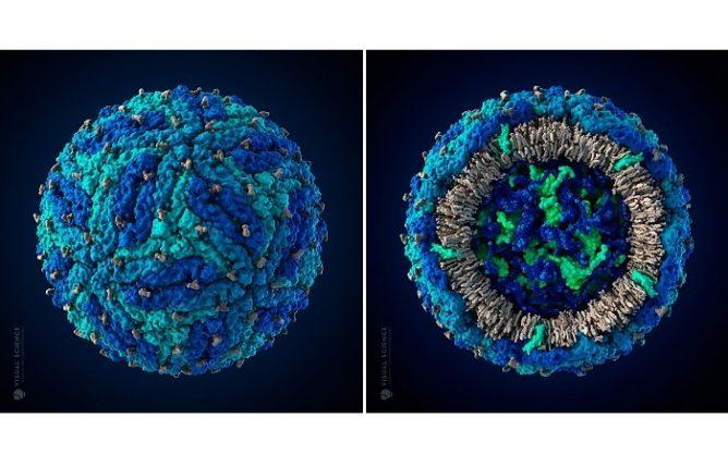 Трехмерная модель вируса