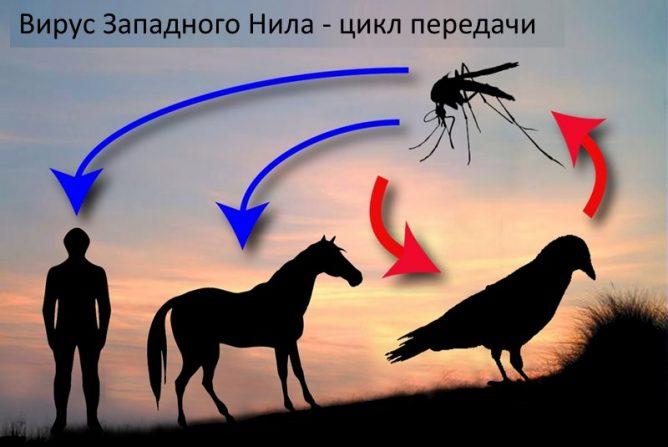 Вирус Западного Нила