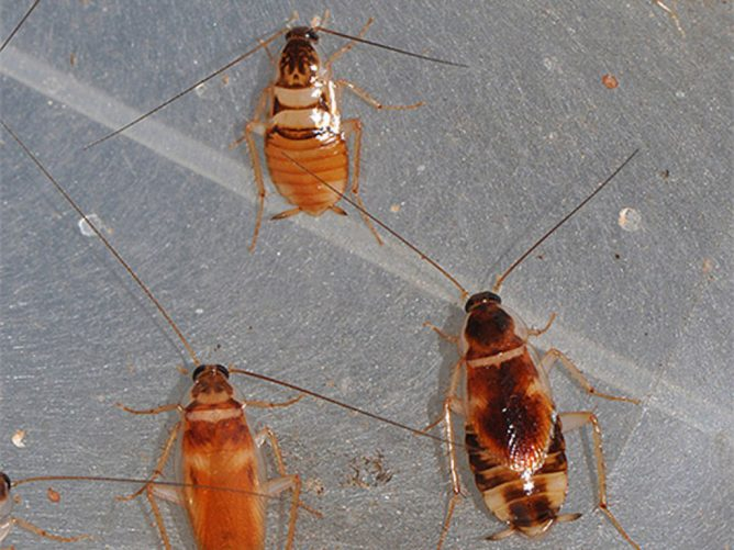 Нашествие тараканов
