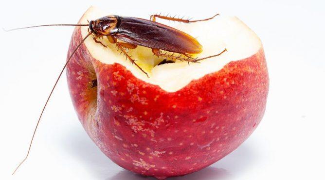 Еда для тараканов