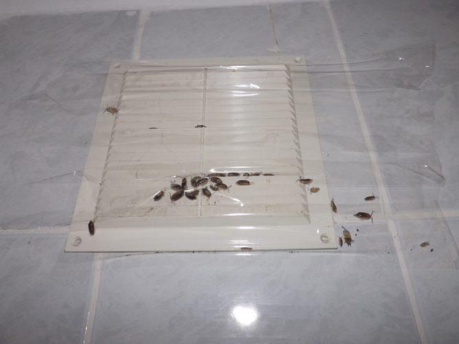 мокрицы фото в ванной