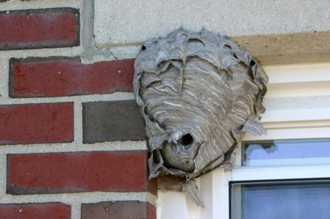 Гнездо на доме