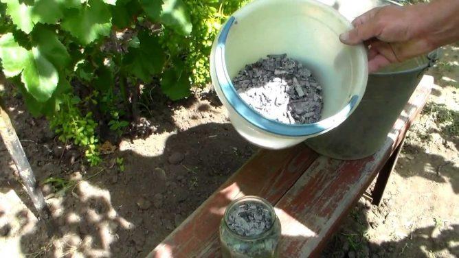 Чем травить колорадского жука на картошке: обзор средств с отзывами