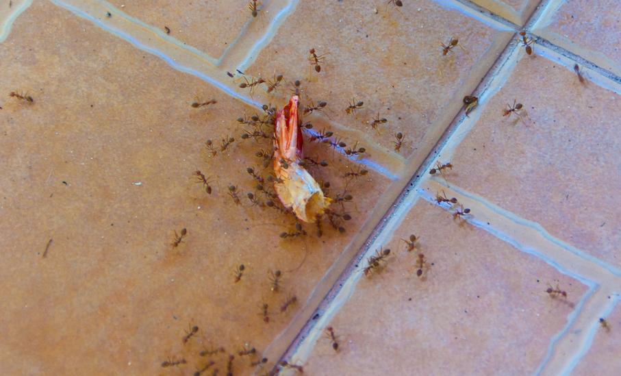 все муравьи мелкие а один огромный уто это фильм
