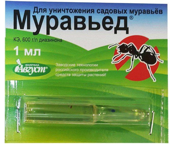 муравьед в ампуле
