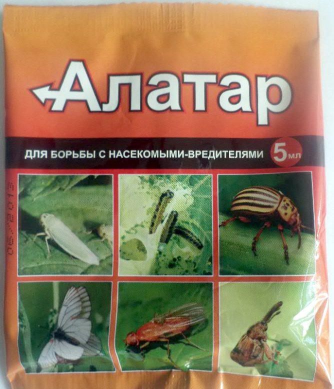 muha 11 668x778 - Как бороться с луковой мухой на грядке: обзор средств