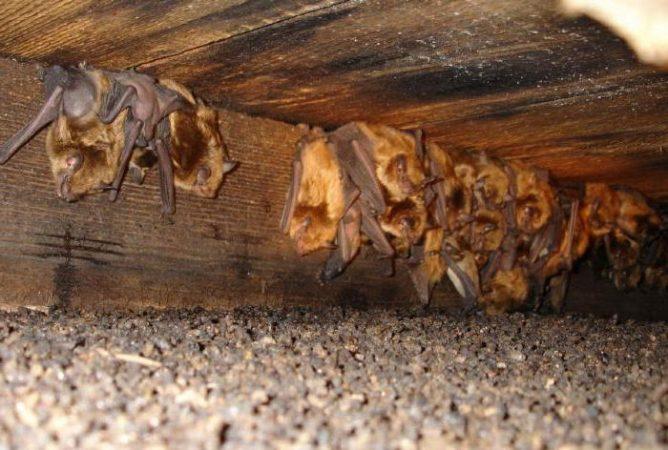 Колония летучих мышей