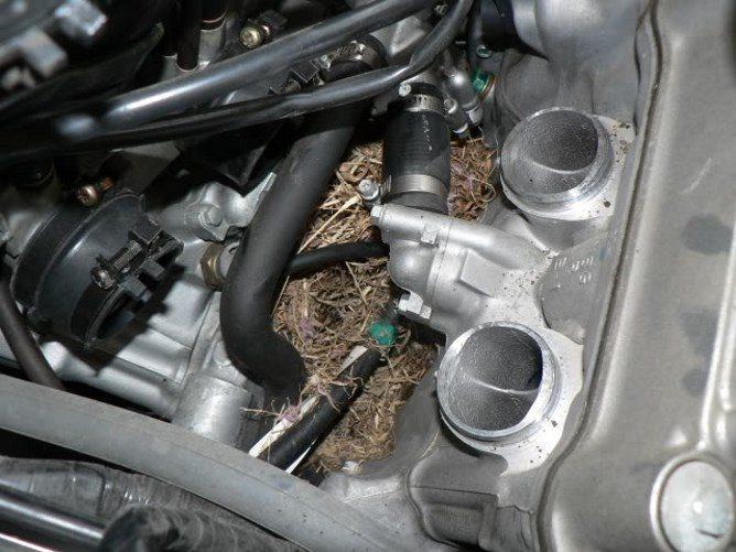 Мышиное гнездо в машине