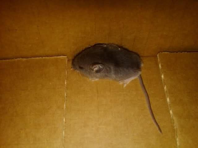 мышь в гараже