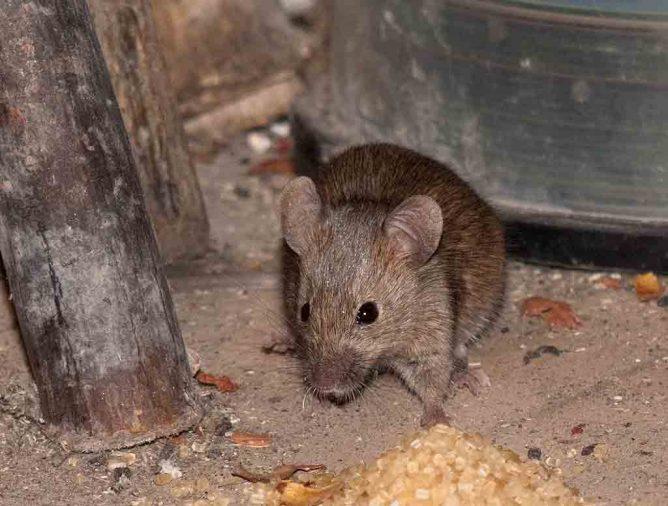 Что делать с поймано мышью