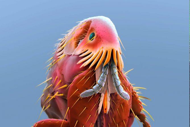 Блоха под электронным микроскопом