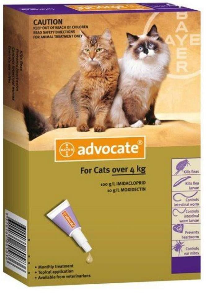 Адвокат для котов
