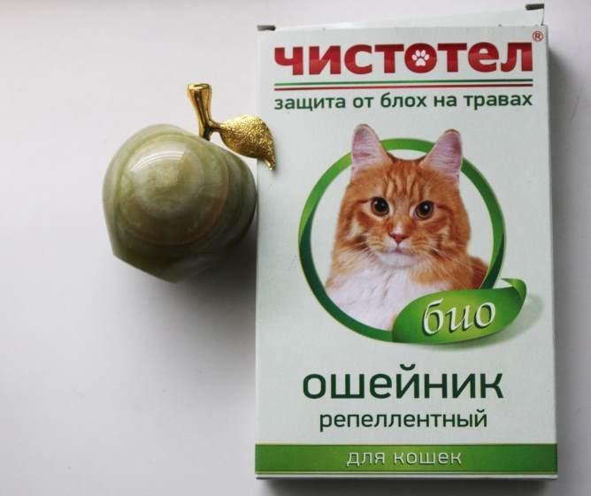 Как вылечить котенка от блох в домашних условиях 975