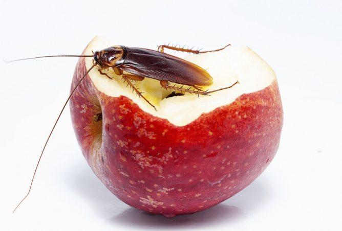 Пища таракана