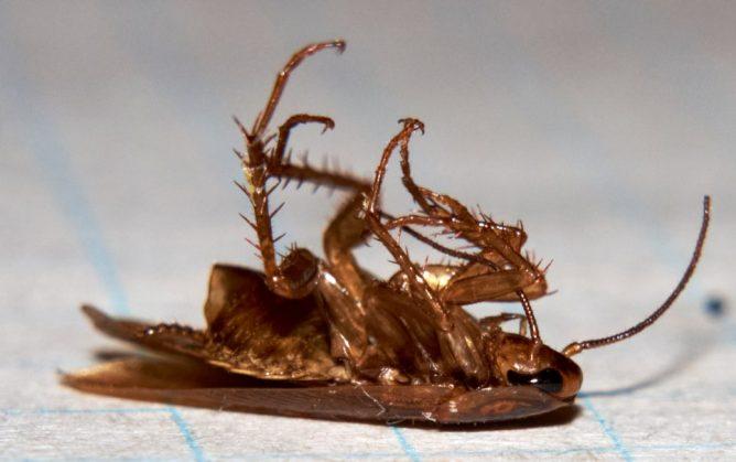 самый эффективный дихлофос от тараканов