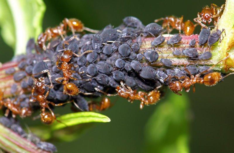 Маленькие насекомые – большие проблемы: эффективные способы борьбы с рыжими муравьями дома, в саду и на огороде
