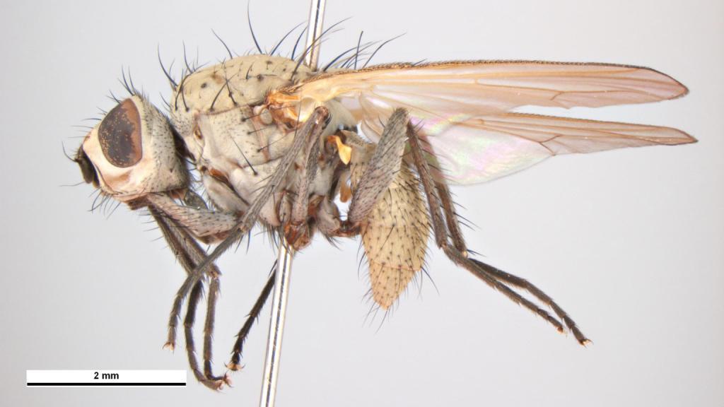 Советы по уничтожению луковых мух