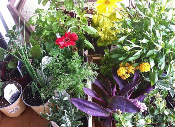 Высокая плотность растений